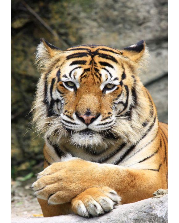 Lais Puzzle - Tiger - 100, 500 & 1.000 Teile