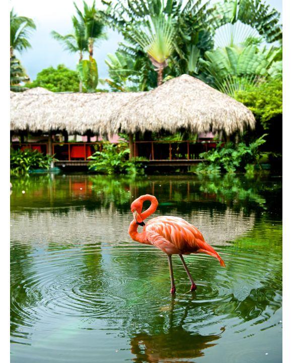 Lais Puzzle - Flamingo - 1.000 Teile