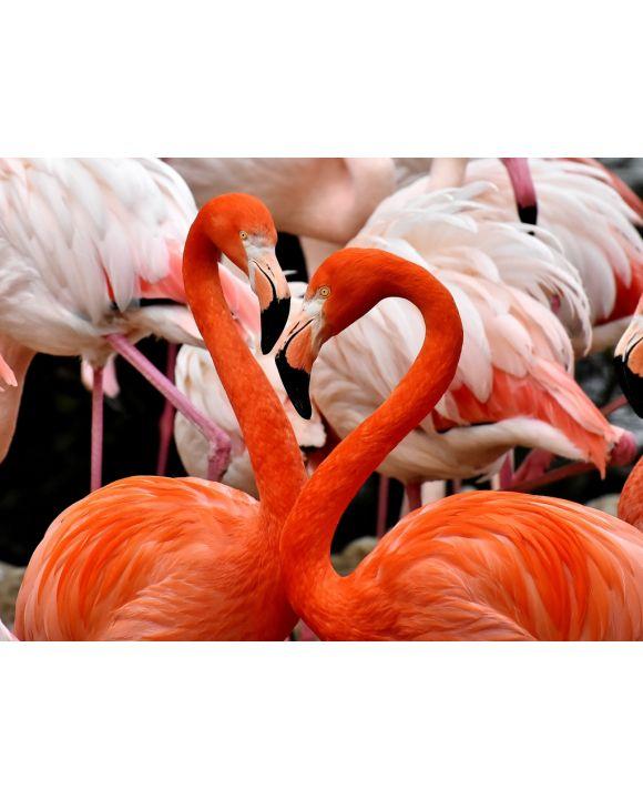 Lais Puzzle - Flamingos - 500 Teile