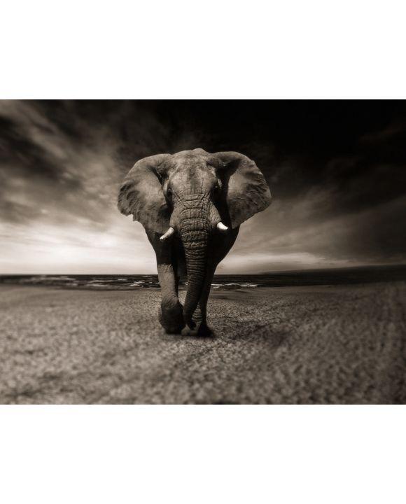 Lais Puzzle - Elefant - 2.000 Teile