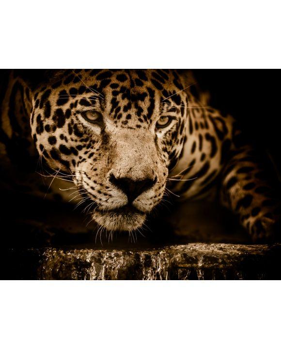 Lais Puzzle - Jaguar - 100, 200, 500, 1.000 & 2.000 Teile